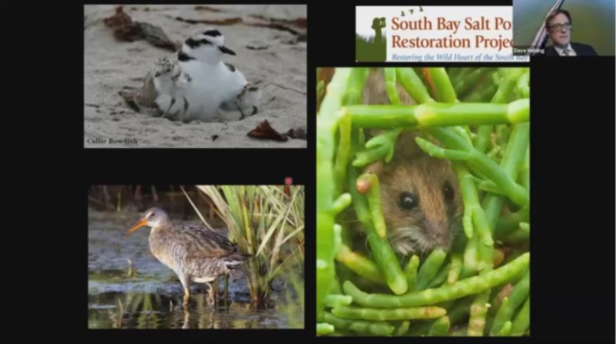 Restoration Project Presentation: Wetland Restoration in the South Bay